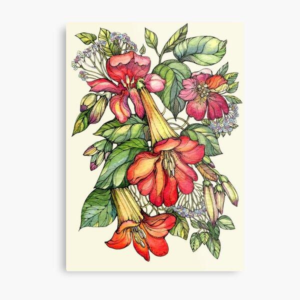 Red Trumpet Vine flowers. Metal Print