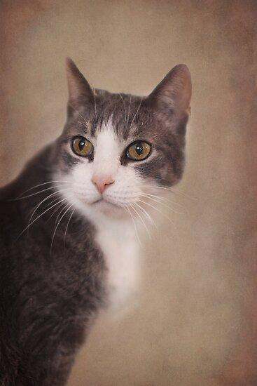 Pretty Kitty ~ by Renee Blake