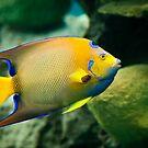 Fish Rising by EdwardKay