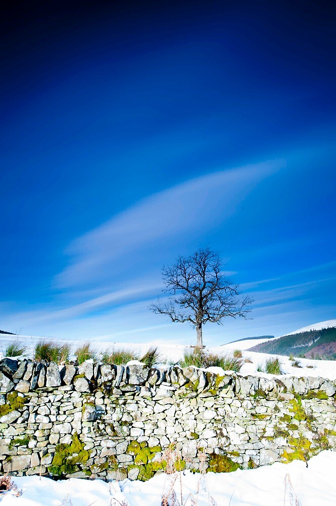 Tree and mossy wall in the snow, Southern Upland Way, Scottish Borders by Iain MacLean