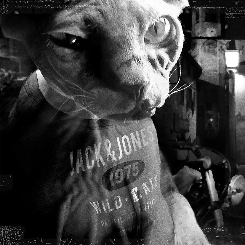 Wild Cat by Farawayjoe