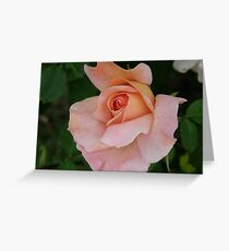 Apricot Nectar Greeting Card
