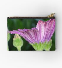 Purple And Pink Daisy Flower in Full Bloom Studio Pouch