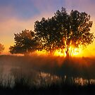 Buttercup Sunrise At Sawhill Ponds, Colorado by Gregory J Summers