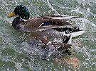 Splish Splash  by Betsy  Seeton
