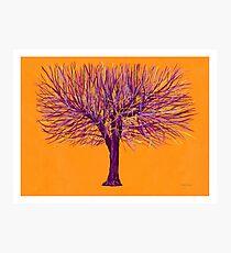 Winter Tree Series 4 Photographic Print