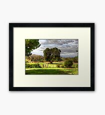 160 year old Olive Tree  Cooma Cottage Yass NSW  Australia  Framed Print
