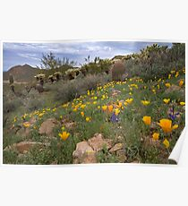 Field of Spring Poppies Poster