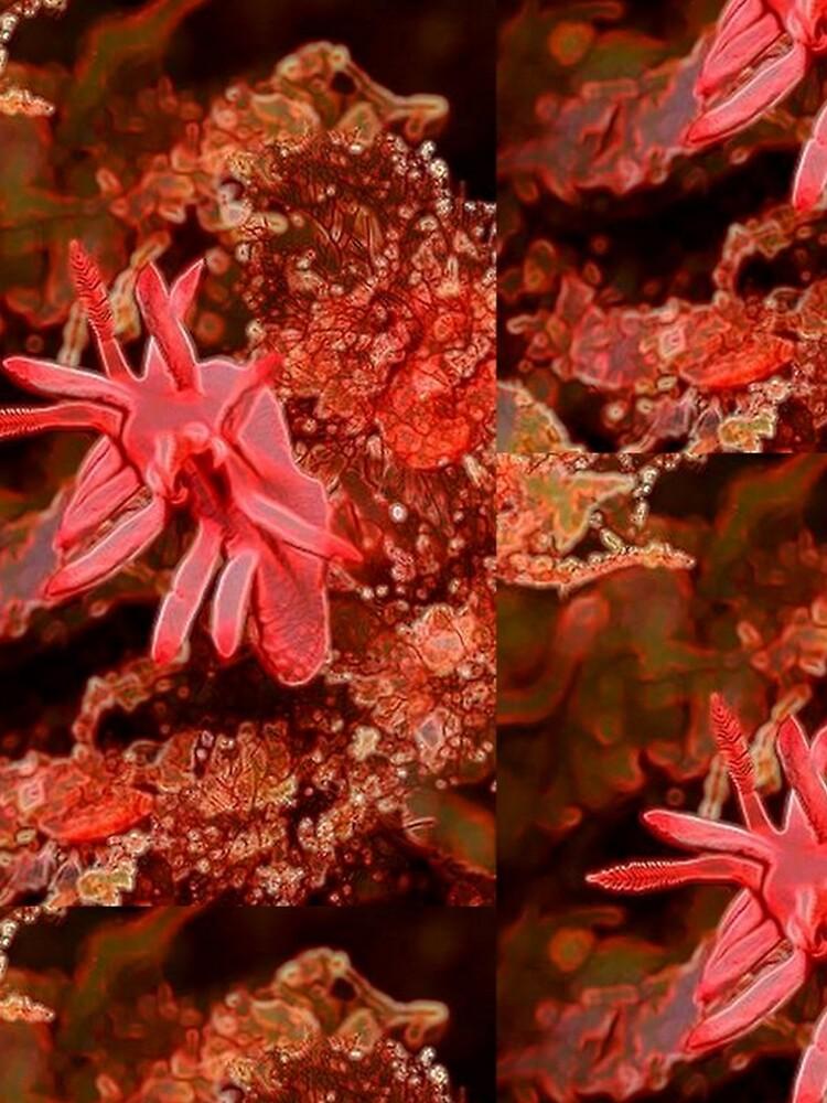 SEA OCEAN LIFE ANEMONE by michaeltodd