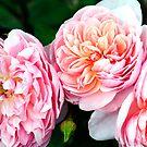Three Beauties by Susan Moss