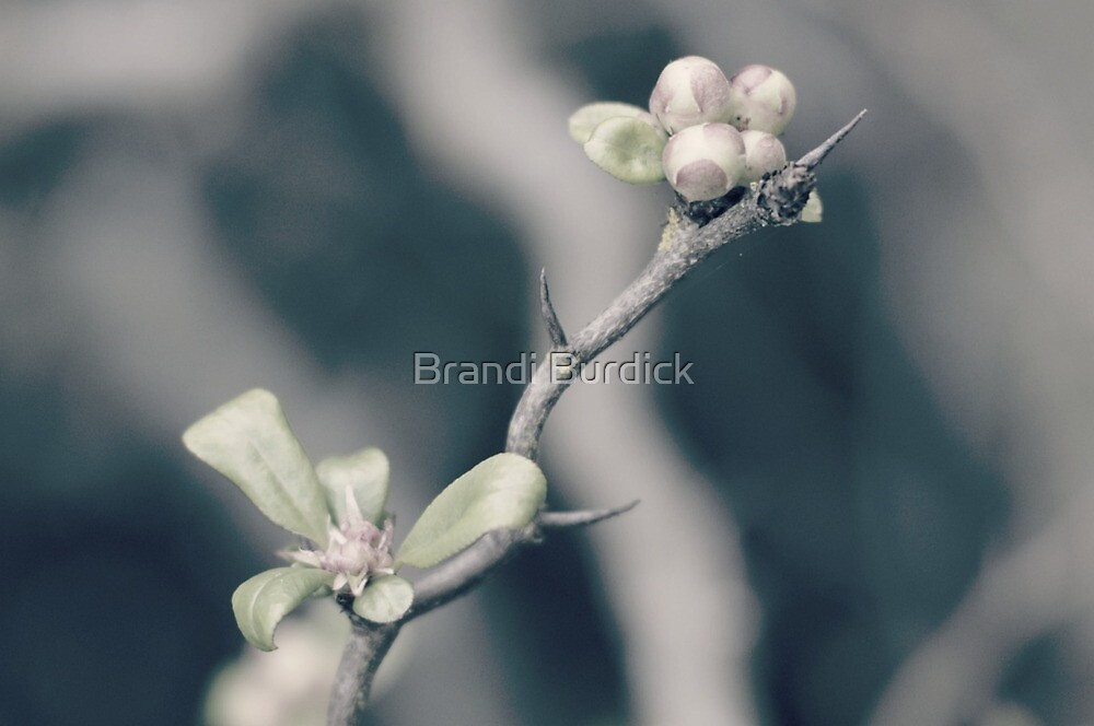 delicate hints of spring...two~ by Brandi Burdick