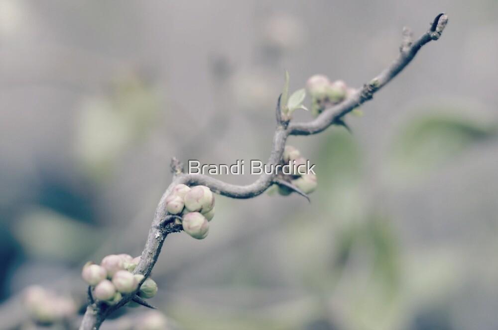 delicate hints of spring...three~ by Brandi Burdick