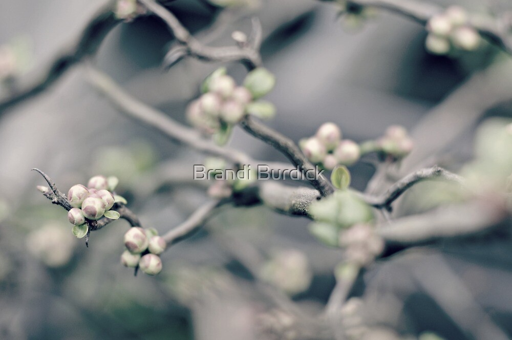delicate hints of spring...four~ by Brandi Burdick