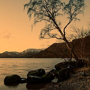 Ullswater Tree - Evening Light by davidlewins