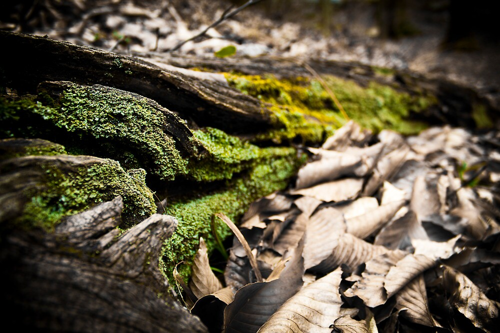 Mossy Roots by Christopher Boscia