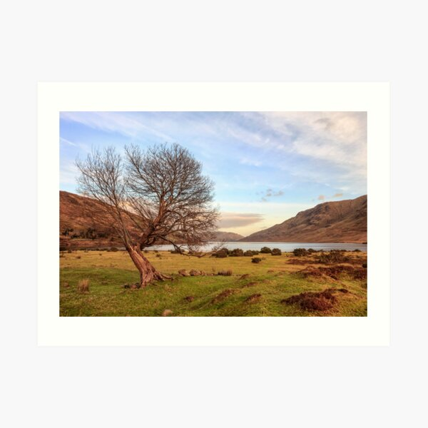 Lone Tree at Lough Nafooey Ireland. Art Print