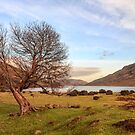 Lone Tree at Lough Nafooey Ireland. by MickBourke