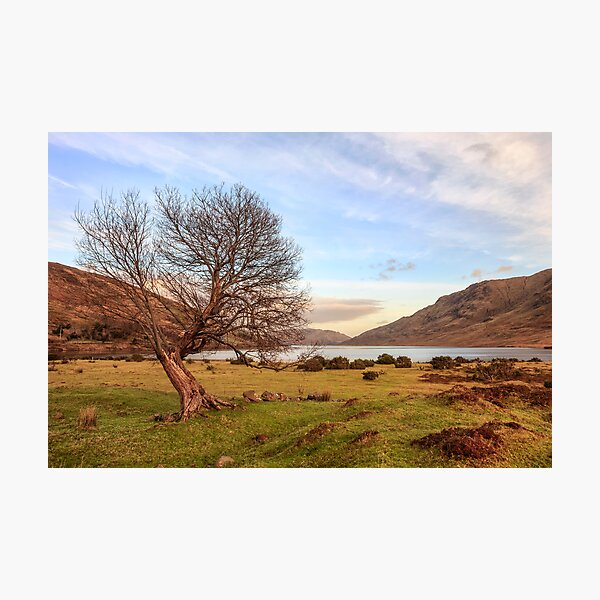 Lone Tree at Lough Nafooey Ireland. Photographic Print