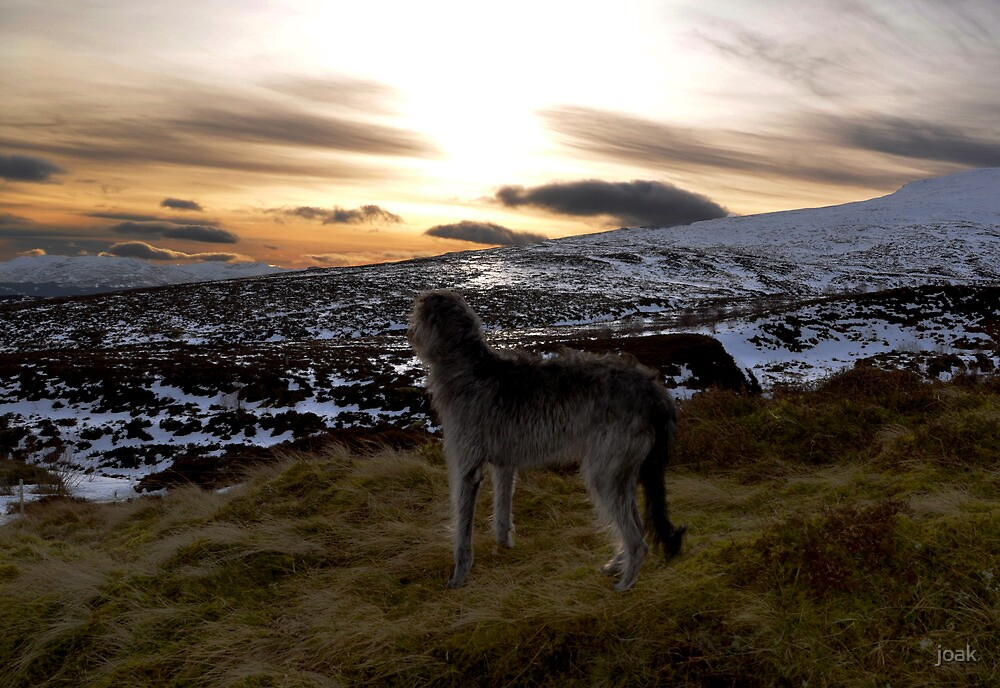my hearts still in the highlands by joak