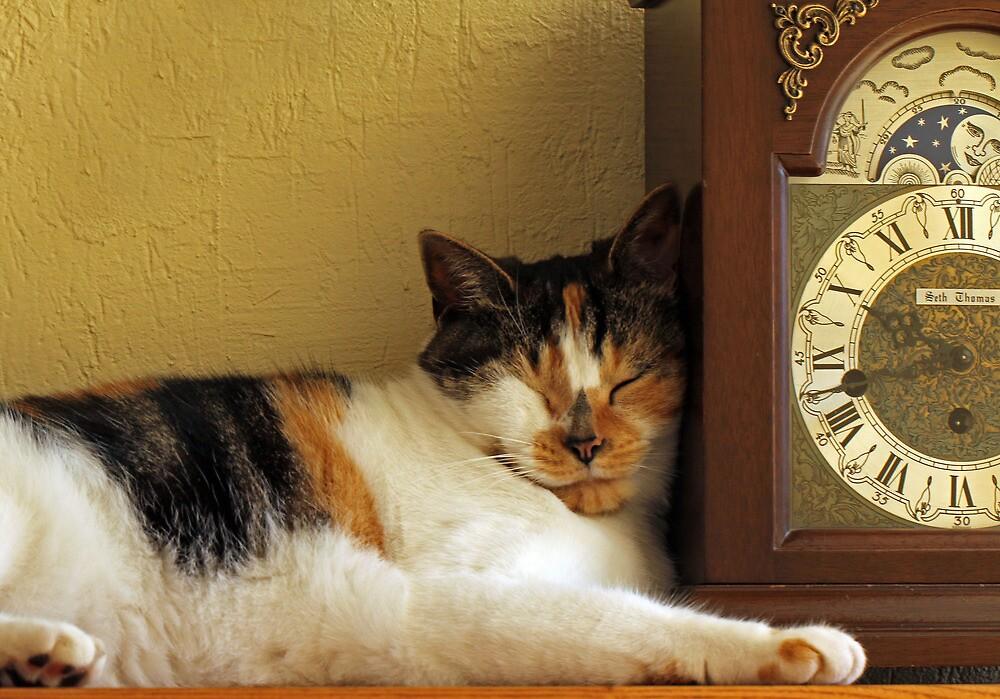 Nap Time by Lynn Gedeon