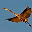 011610 Great Blue Heron by Marvin Collins