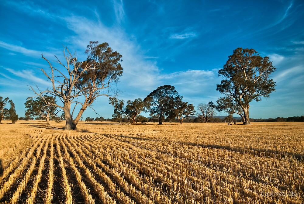 After The Harvest by paulmcardle