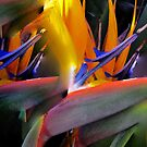 Abstract Composition—Abstracted Birds of Paradise (Flowers)—Version One  by Ivana Redwine
