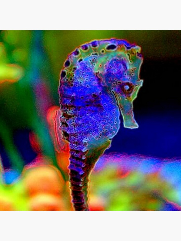 SEAHORSE by michaeltodd