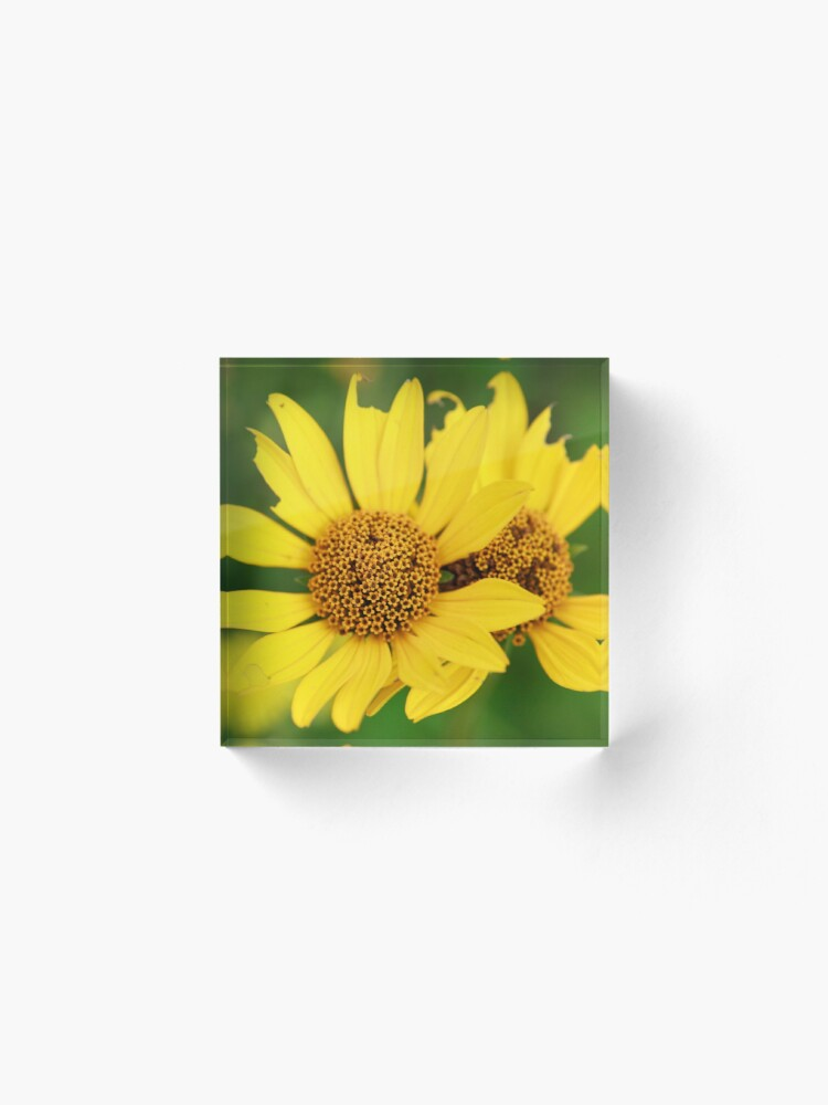 Alternate view of Oxeye bouquet Acrylic Block
