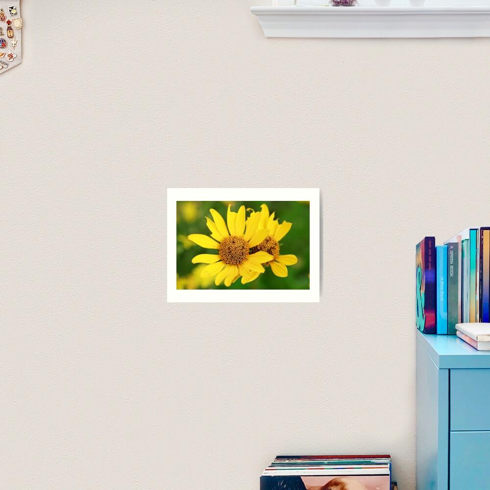 Oxeye bouquet Art Print