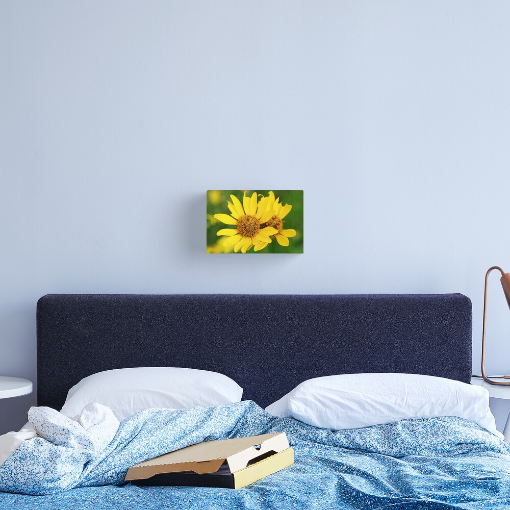 Oxeye bouquet Canvas Print