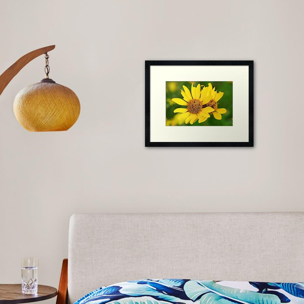 Oxeye bouquet Framed Art Print