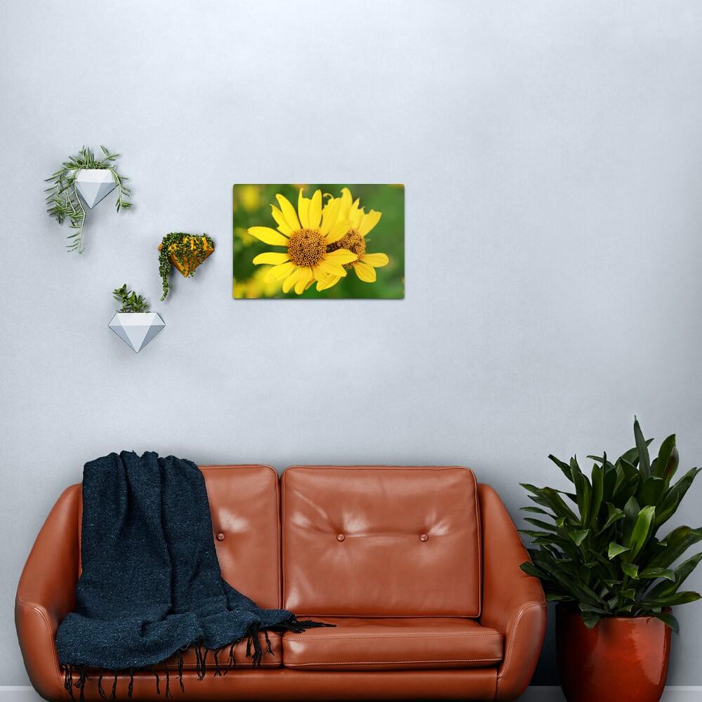 Oxeye bouquet Metal Print