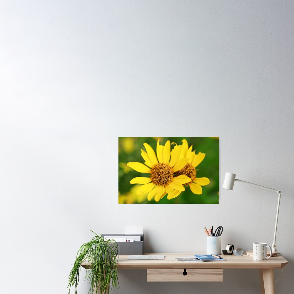 Oxeye bouquet Poster