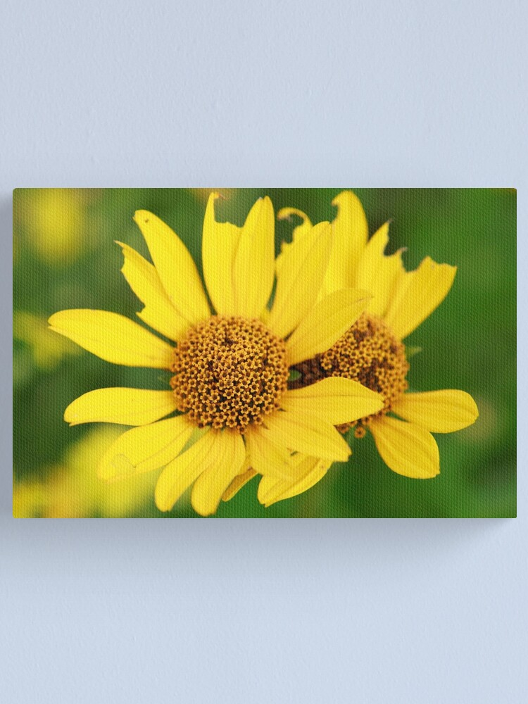 Alternate view of Oxeye bouquet Canvas Print