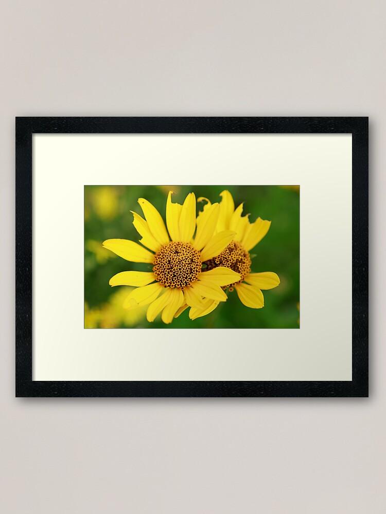 Alternate view of Oxeye bouquet Framed Art Print