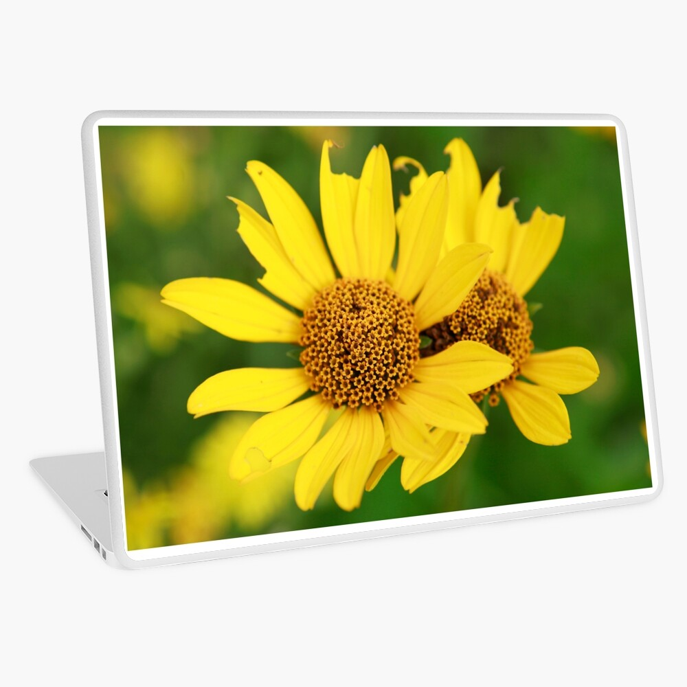 Oxeye bouquet Laptop Skin