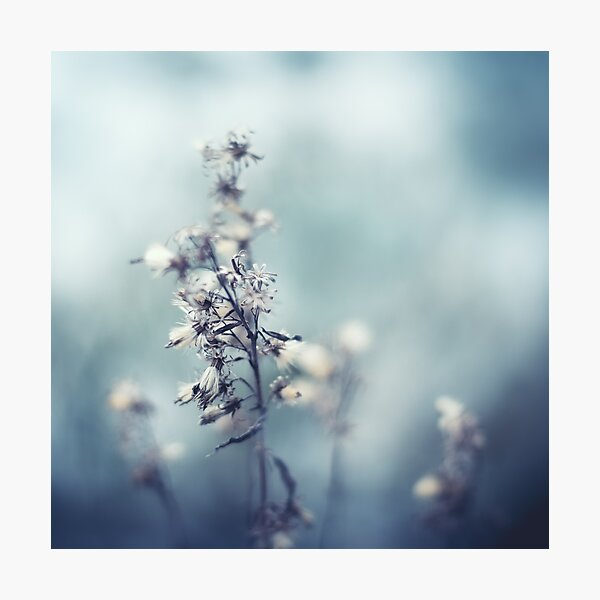 Winter Flowers Photographic Print