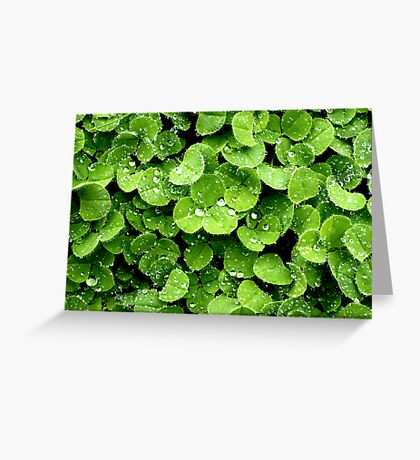 Clovers (available in iphone, ipod, & ipad cases) Greeting Card