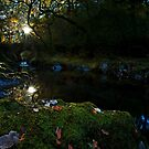 Autumn at the  Roman bridge by Beverly Cash