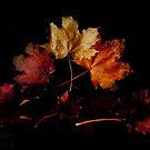 Autumn leaves by Beverly Cash