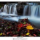 autumn falls by Beverly Cash