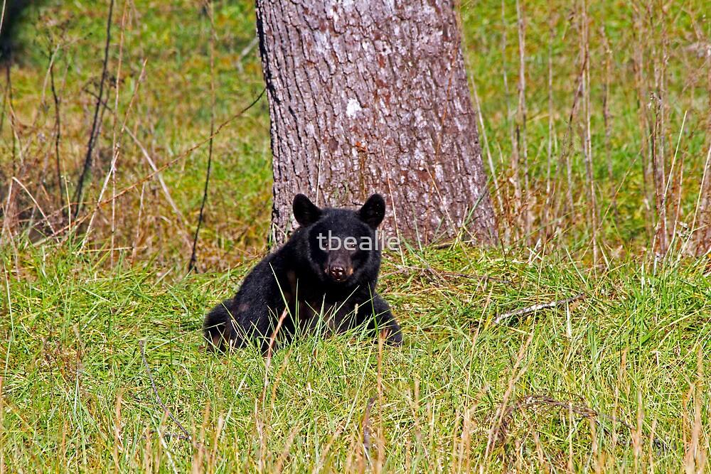 Black Bear in Cades Cove by Terri~Lynn Bealle