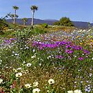 Namaqualand#1 - South Africa by Bev Pascoe