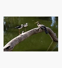 Two Stilts and a Dart Photographic Print