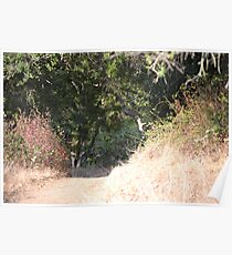 A Path to Contemplate  Poster