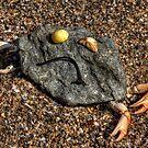 sad rock crab by Beverly Cash