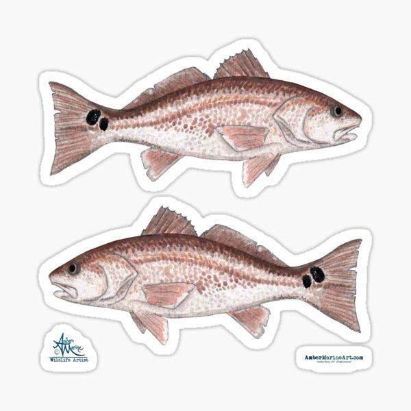 """Redfish"" by Amber Marine ~ watercolor fish art, © 2013 Sticker"
