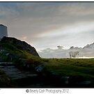Horse on Llanddwyn island by Beverly Cash