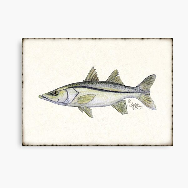 """""""Snook"""" by Amber Marine ~ watercolor fish art, © 2013 Canvas Print"""